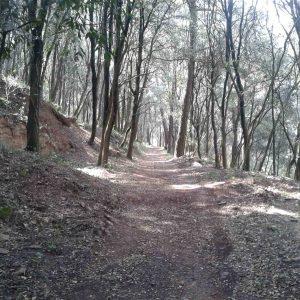 bosque_20150429_1226863478