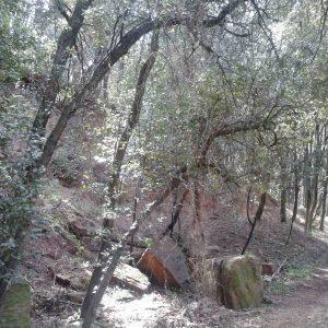 bosque_20150429_1837095098