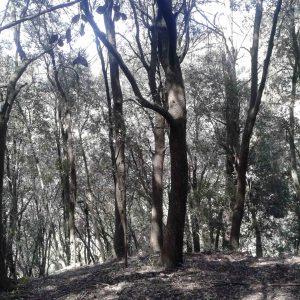 bosque_20150429_2027024630