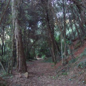 el_bosque_20111228_1561477368