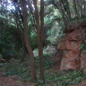 el_bosque_20111228_1699740908