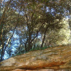 el_bosque_20111229_1176416634