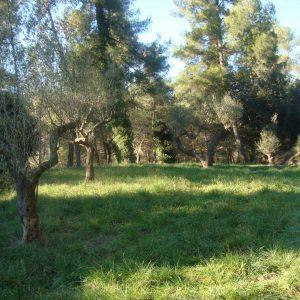 el_pla_de_les_oliveres_20111228_1443083350